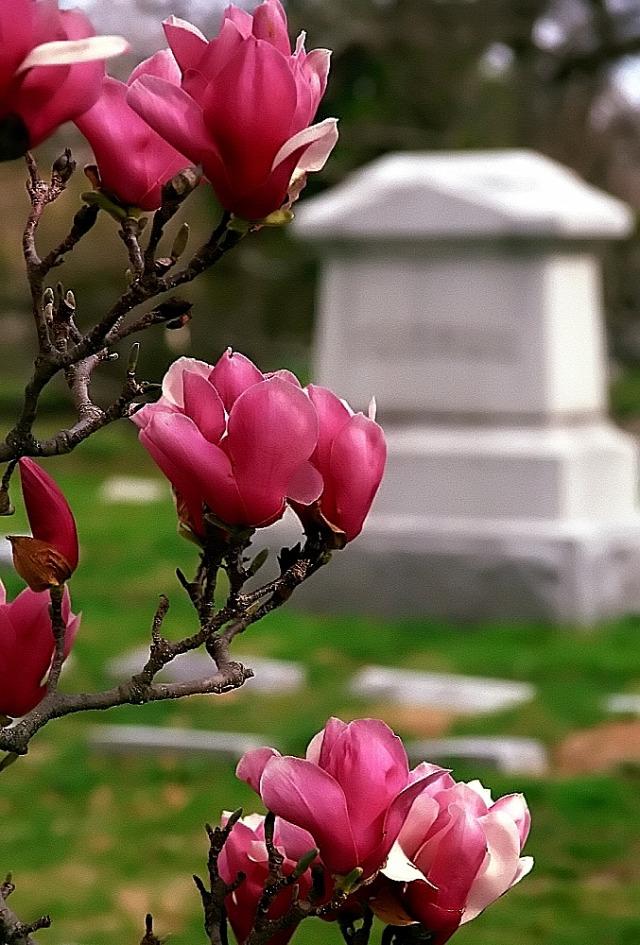 eutanázia  huntington szabadság