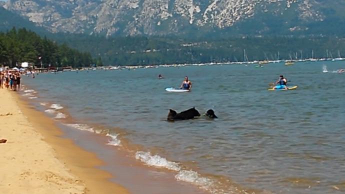 bocs medve Kalifornia strand szórakozás kiemelt