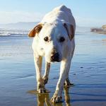 Beteg kuty�ja bakancslist�j�t teljes�ti