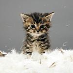 A t�l�l� cica egy hetet t�lt�tt a motorh�ztet� alatt�