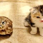 �sszebar�tkozott a bagoly �s a cica