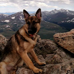 A h�s�ges kutya megmentette gazd�j�t a vill�mcsap�st�l