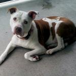 A kutyus megmentette gazd�ja �let�t, most m�gis otthontalan