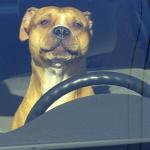 A kutya 4 �r�n kereszt�l volt a forr� aut� rabja