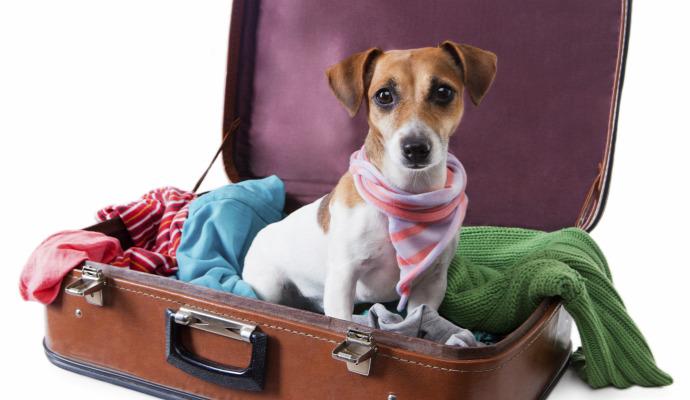 színes kieemlt kutya szálloda levél tulajdonos vicces válasz állat