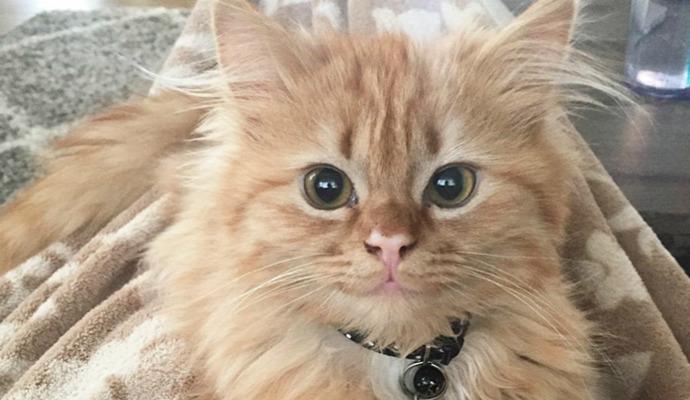színes kiemelt cica mosoly otthon mentett