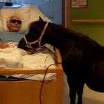 A beteg nagypap�t megl�togatta kedvenc p�nija