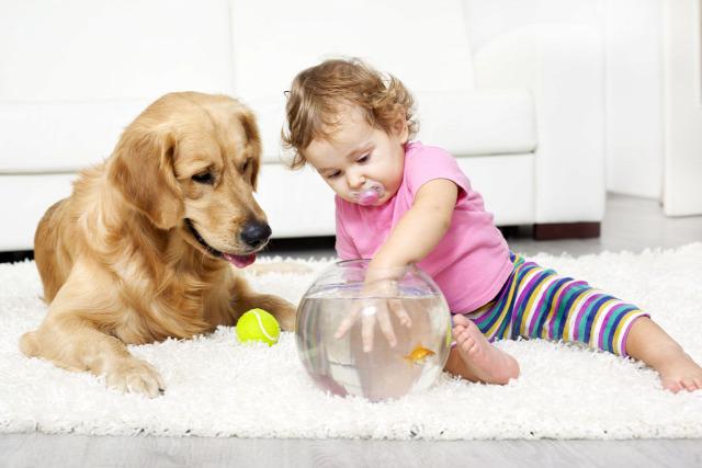 szülőknek 1-2 éves gyerek megfelelő fejlődés