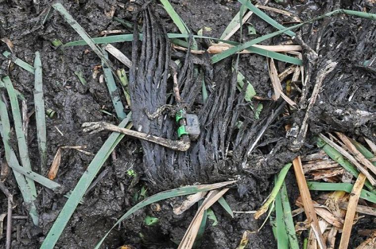 hírek vadvilág fekete gólya vaddisznó