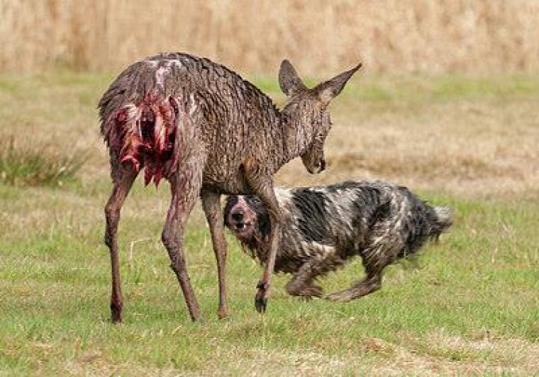 hírek vadászat kutya Heltai Miklós