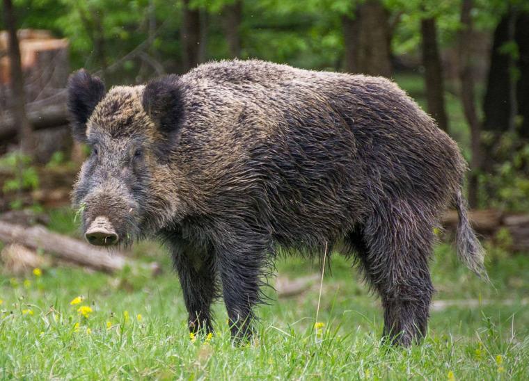 hírek jogalkotás rendelet tájegység vadgazdálkodási terv