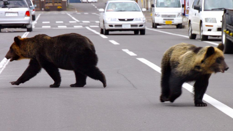 hírek vadvilág medve Erdély Románia Európai Unió