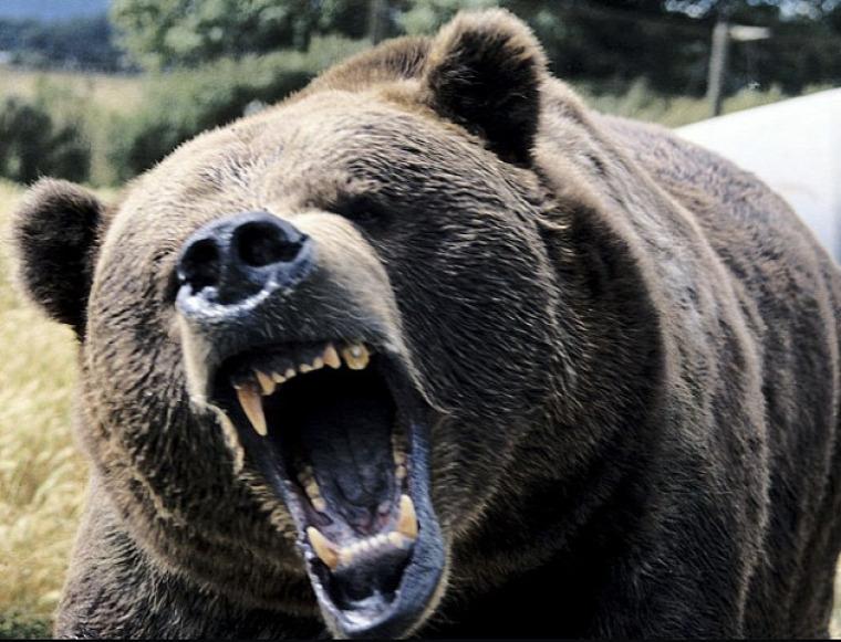 hírek medve Hargita Románia