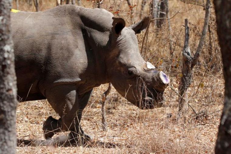 vadvilág Afrika orvvadászat