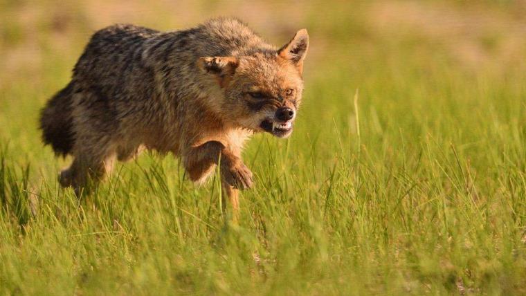 vadászat vadvilág OMVK Baranya megye dúvad