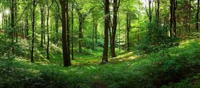 hírek erdőtörvény erdőgazdálkodás