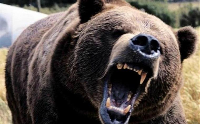 Erdély medve Hargita Románia hírek