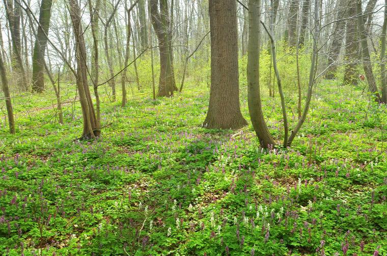hírek erdő