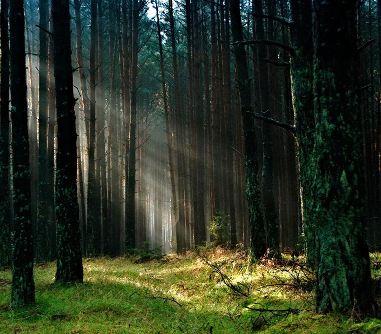 hírek Fazekas Sándor erdészet nemzeti park