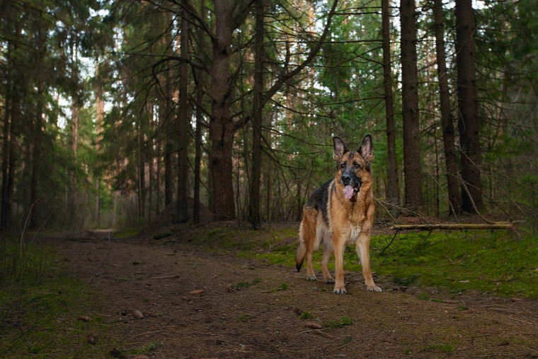 hírek vadvilág kutya