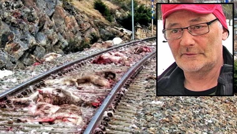 hírek Norvégia vonatbaleset rénszarvas