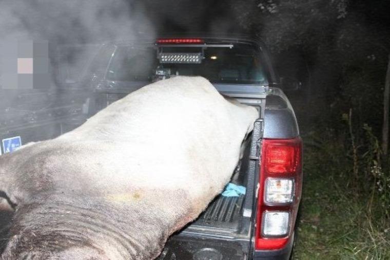hírek vadászat szarvasmarha lopás