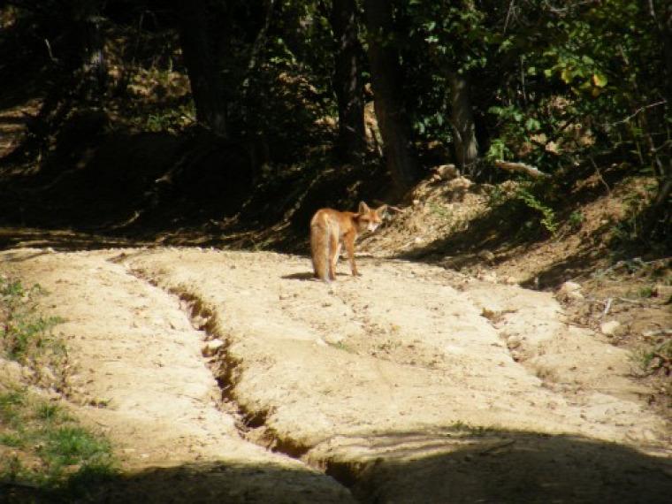 hírek jogalkotás vadaskert