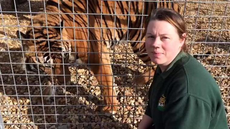 hírek vadvilág állatkert tigris