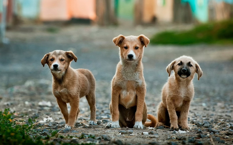 hírek kutyalövés kutya