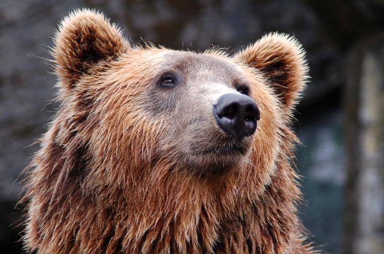 hírek vadvilág medve Aggteleki Nemzeti Park