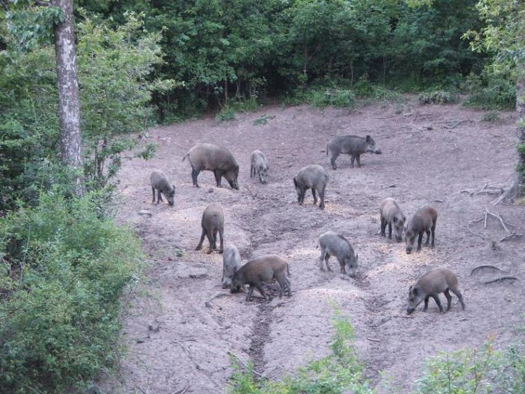 hírek vadászat FM vadaskert