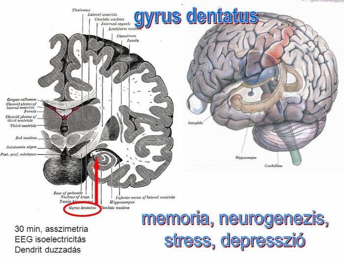 #memória #agy egészség