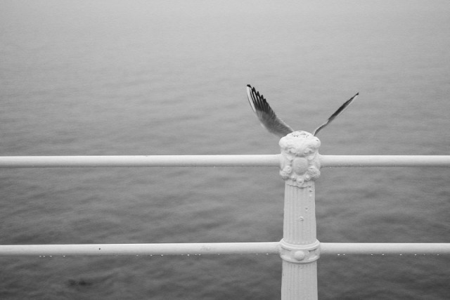 fotó fotóművészet érdekes