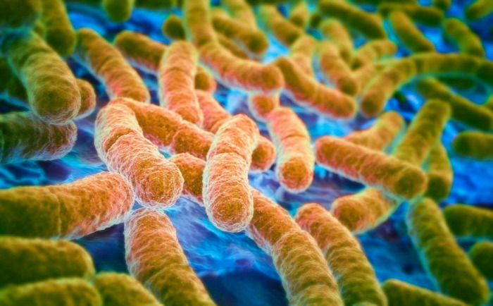 egészség átverés bélflóra probiotikum antibiotikum prebiotikum