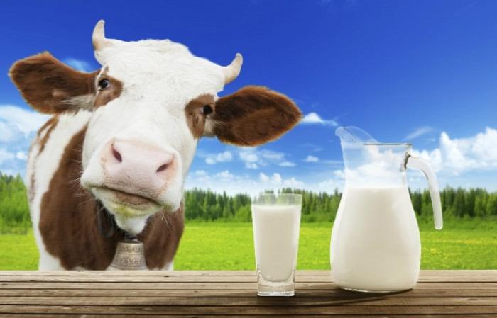 egészség táplálkozás tej tejfarm kalcium