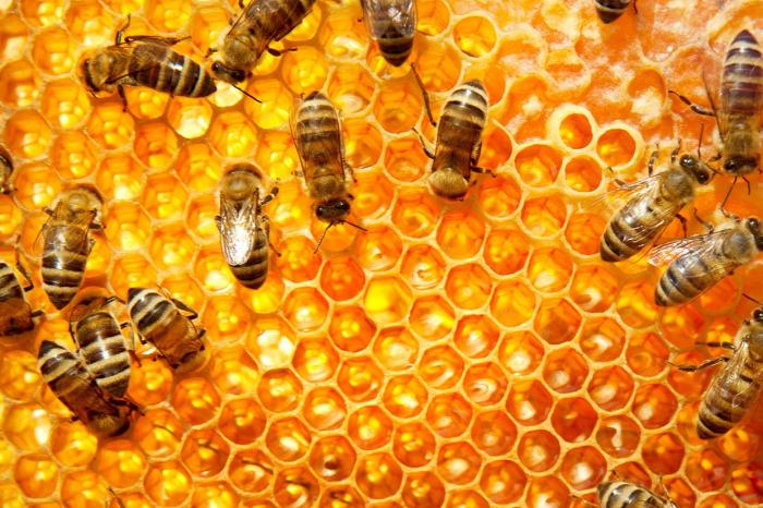 érdekesség érdekességek méhek méhek a történelemben méhanyuci