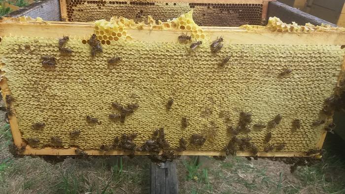 méz méhanyuci méz érdekesség méhtánc mézkészítés érdekességek érdekesség