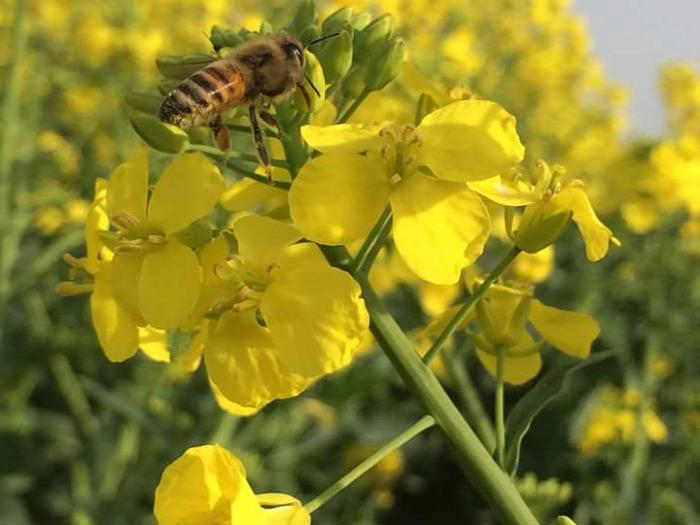 méz méhek méhviasz virágpor propolisz méhpempő méhlárva beporzás méhméreg méhanyuci