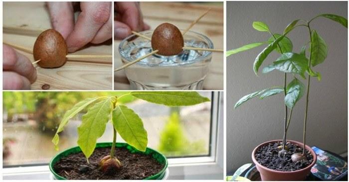 egészség egészségünkre avokádó afrodiziákum recept vegán receptek guacamole avokádós csokimousse avokádós csokimousse torta test táplálkozás gasztro