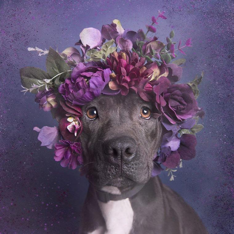 csányi vilmos születésnap kutyák etológia 83 év