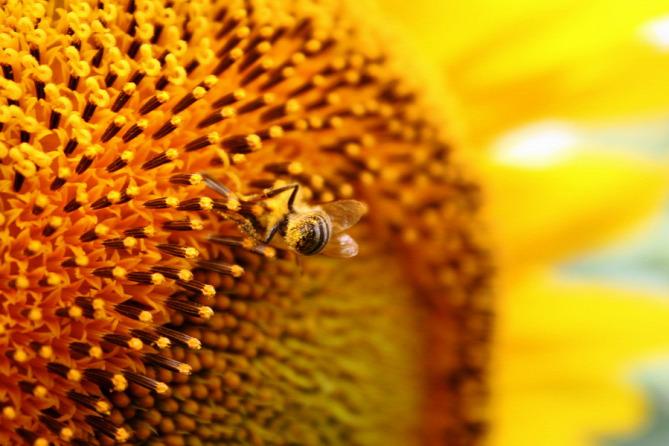 egészség babavárás méhpempő