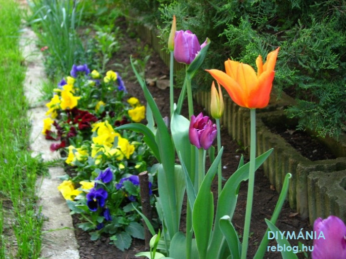 kert virág