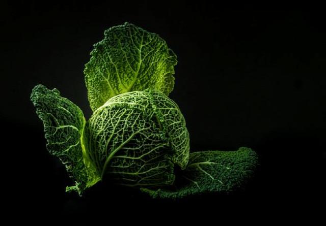 vegyszermetes növényi permet tápoldat