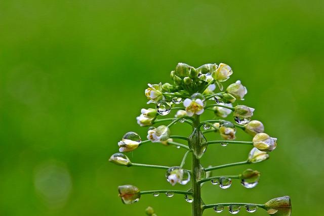női bajok gyógynövények kvíz