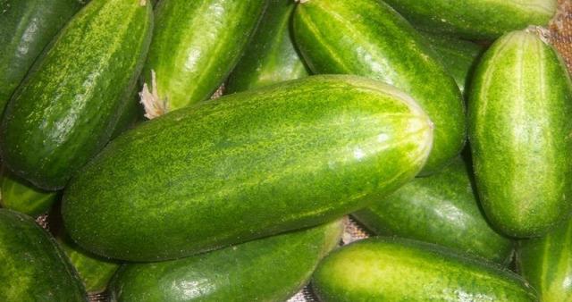 kert tervezése vetésforgó növénytársítás növények családban