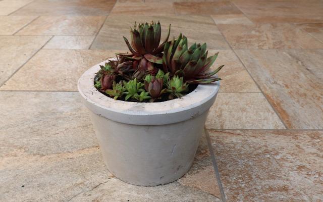 DIY csináldmagad betonkaspó kövirózsa beton kert