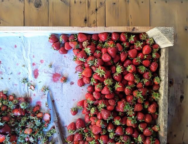 DIY csináldmagad eper gastro kert lekvár