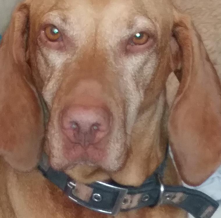 kutya gázolás  rendőrség  károk  árak kártérítés  veszteség
