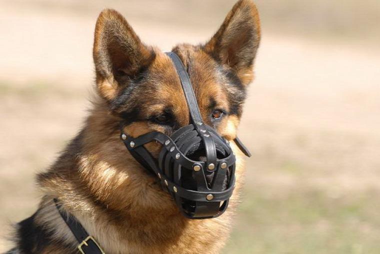 #tömeg közlekedés #interjú #kutya