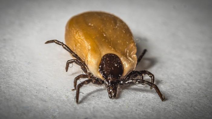 Lyme-kór